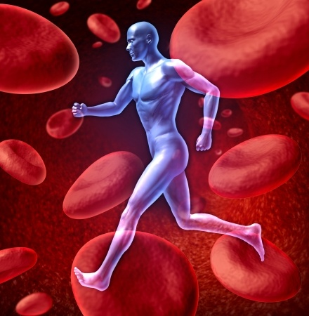 Nitric Oxide for Healthy Blood Flow
